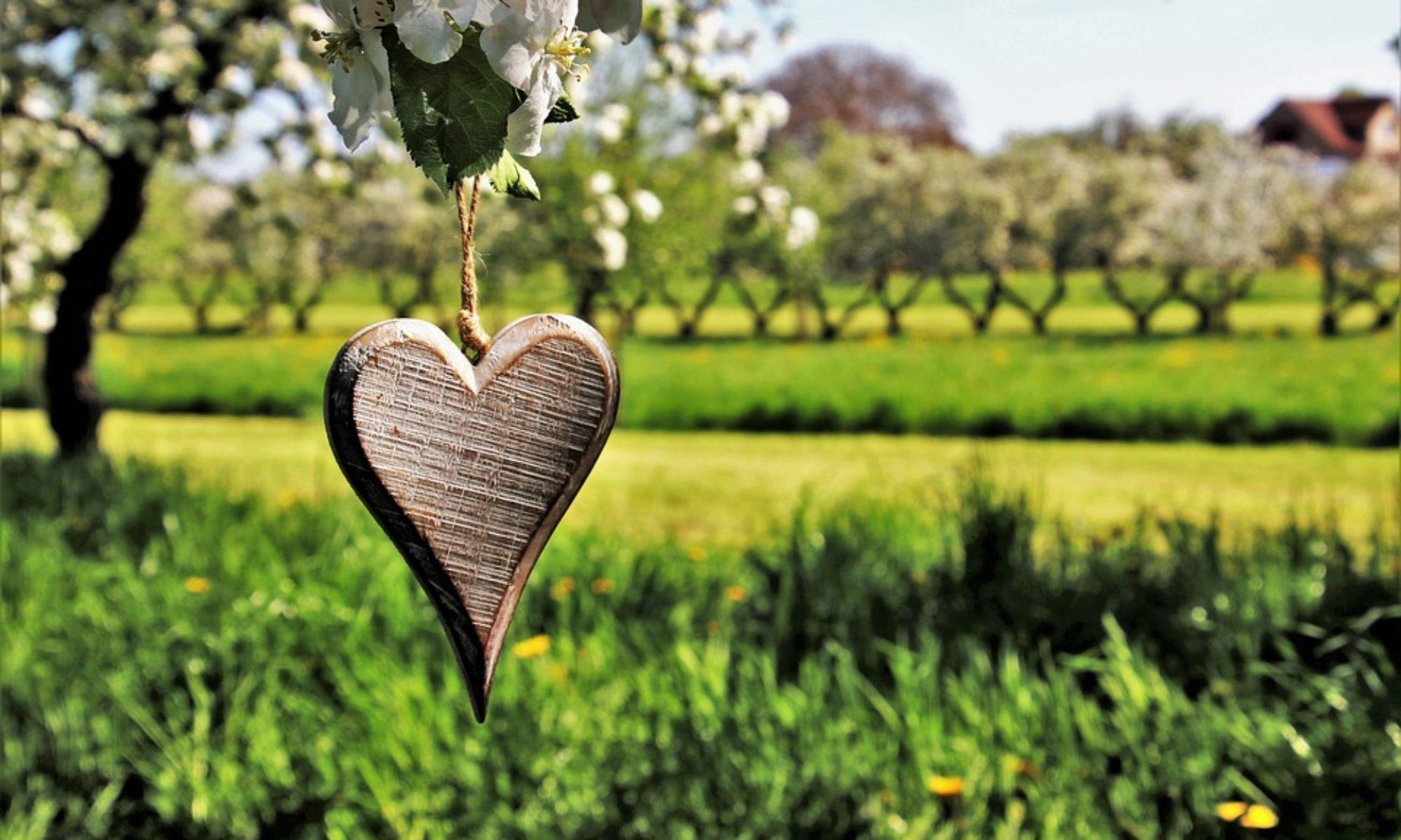 armonia benessere cura empatia sensibilità ambiente